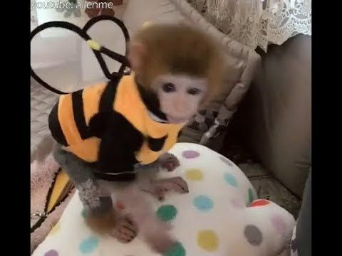 making a bee clothes