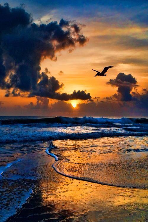 Sunset, sunrise, Seagul, water, waves, reflections, clouds, beauty of Nature…