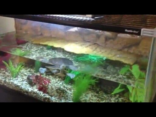 Cleans fish tanks and Ponds indoors and outdoors