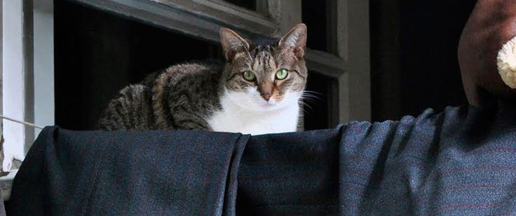 Aprenda como remover pelo de gato na roupa sem sacrifícios! Veja mais em: http://dicasdacasa.com/removendo-pelo-de-gato/