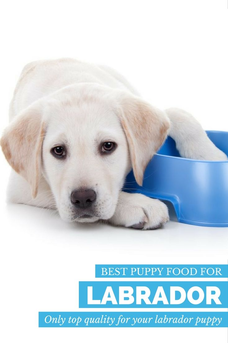Best Food For Ibs In Dogs