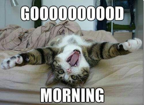 fbbf8874967145ebafd316e42720de1d funny cats funny animals 444 best aminals!!! images on pinterest funny animals, ha ha and