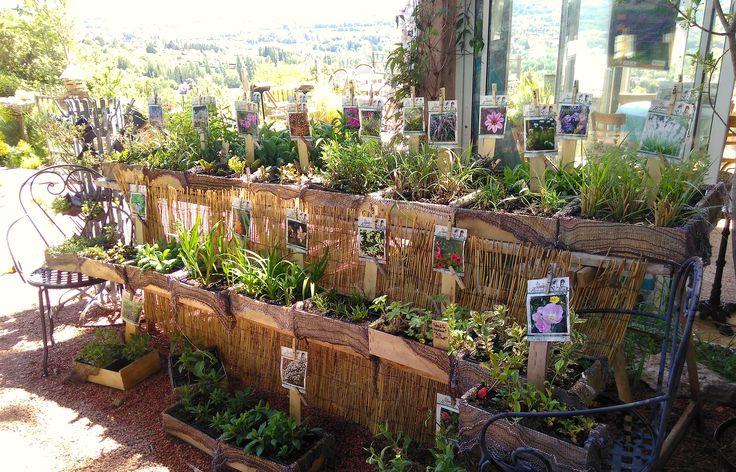 """production de plantes vivaces et une plus grande diversité de choix de plantes vivaces-""""Les Jardins des Hurlevents """" http://www.plantes-vivaces-hurlevents.com/"""