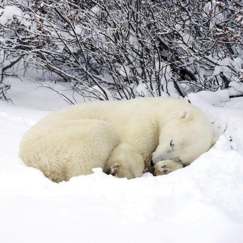 hibernation | animals | Pinterest