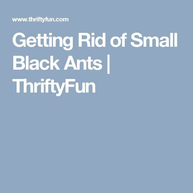 Getting Rid of Small Black Ants   ThriftyFun