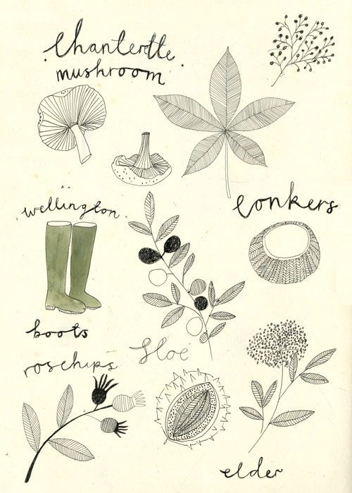 Foraging in the English Hedgerow. http://kattfrank.tumblr.com/