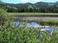 Silver Lake Loop Trail -- Wildflowers in mid-July through August.