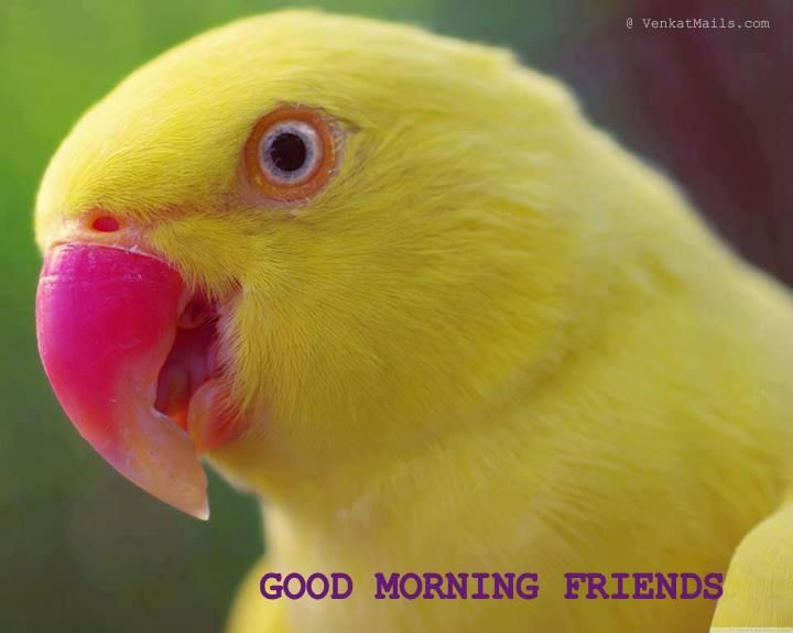 Monday Morning Humor | Happy Monday | Have a nice week ahead | Daily Jokes & Stories