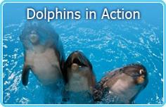 Dubai Dolphinarium @ Creekside Park