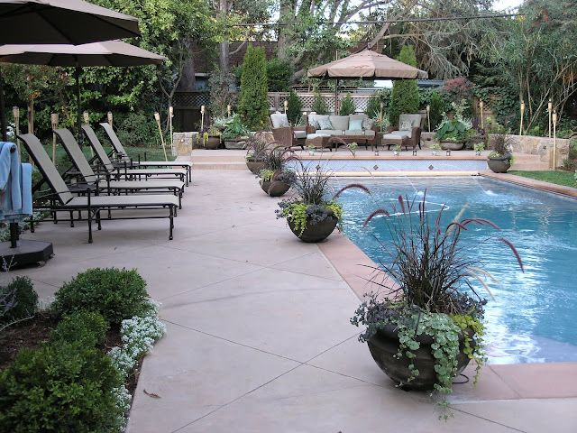 25 Best Ideas About Pool Plants On Pinterest Pool