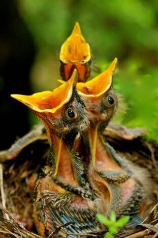 Baby Birds <3