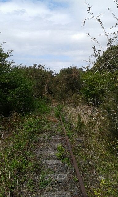 When we first started clearing the rail lines on the Taneatua line, this is how they looked. Clearing the lines in 30+ degrees was hard going