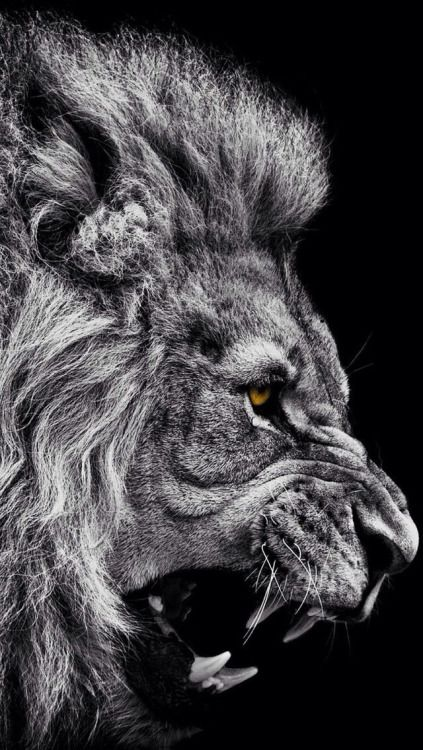 "johnnybravo20: "" Eyes of a King """