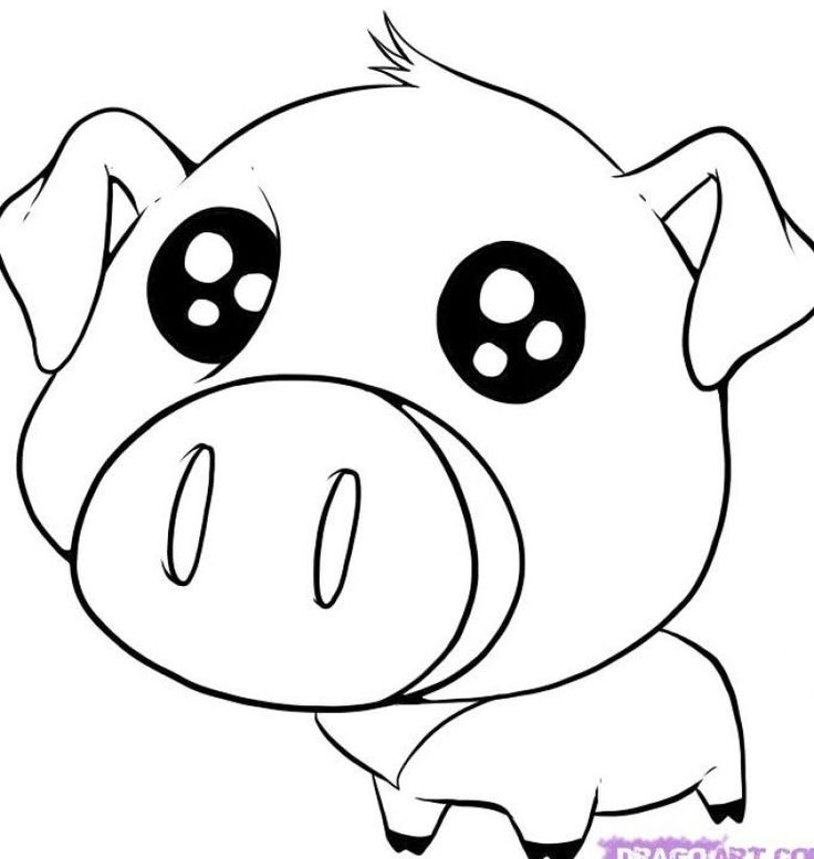 Best 25+ Pig drawing ideas on Pinterest