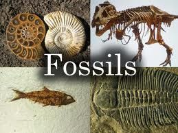 Image result for fossil