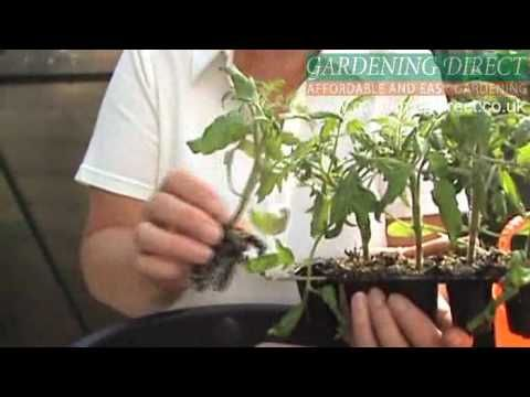 How to plant a Tomato Hanging Basket. Going to DIY THIS