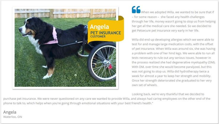 Some lovely words from a customer. So glad we could help her dog! #pethealth #testimonial #petinsurance #dogs