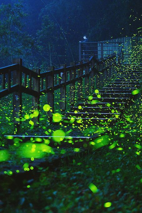 Path | 道路 | Chemin | путь | Sentiero | Camino | Dōro | Firefly Stairs