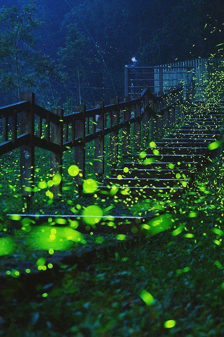 Path | 道路 | Chemin | путь | Sentiero | Camino | Dōro | Firefly Stairs