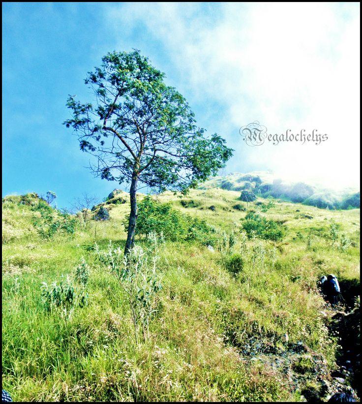 Stand alone. Mt. Sindoro 3153 mAsl, Jawa Tengah, Indonesia