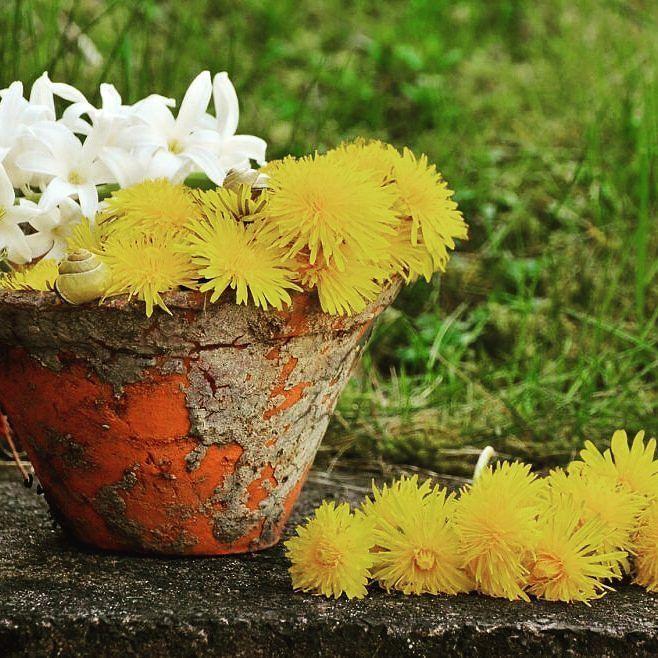Jak ochronić rośliny doniczkowe przed mrozem? http://buff.ly/2fN1DQA #gardenideas #goodtime #doniczka #ogrod #wogrodzienajlepiej
