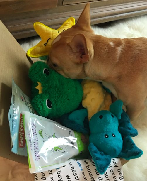 For a limited time, Pinners get a free extra month of BarkBox on a 3, 6, or 12-month plan. We deliver a monthly themed box of curated all-natural doggy treats and fun toys right to your door. It's a pawsome experience (Chloe the Mini Frenchie enjoyed it!) for you to share with your pup. Plans can be customized for big or small dogs, heavy chewers, and pups with allergies. Most of all, it just makes dogs happy. Offer expires 12/31/2015.