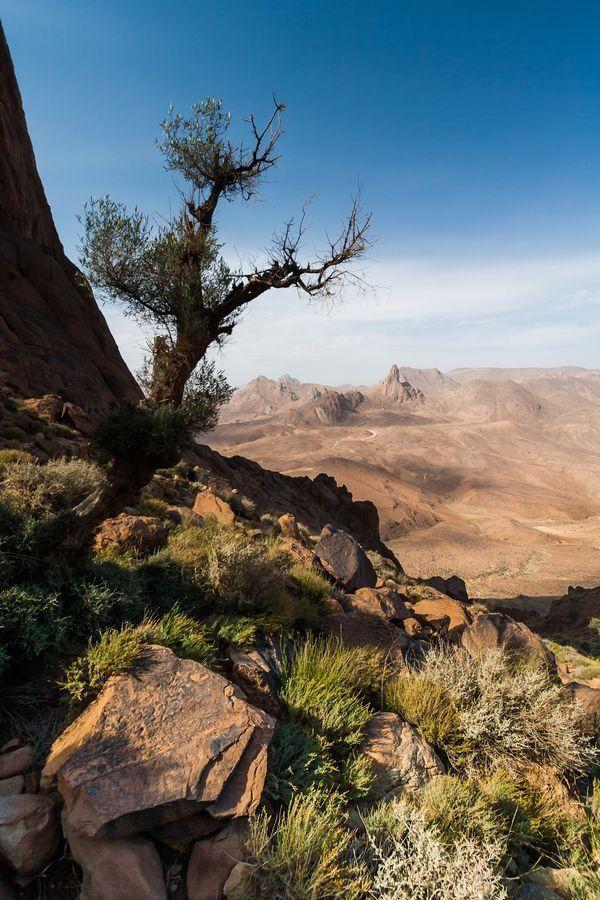 Mother Earth おしゃれまとめの人気アイデア Pinterest Daikkekai 樹木 木 砂漠