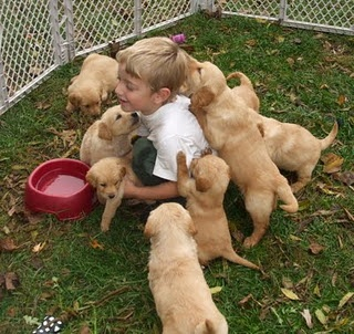 And Golden Retriever puppies!  Lucky kid!