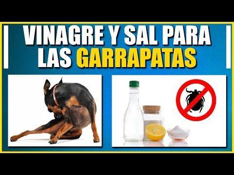 VENENO DE BICARBONATO PARA GARRAPATAS EN PERROS - YouTube
