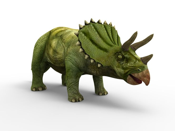 динозавр трицератопс картинки на белом фоне штендер для участия