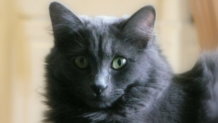 All cats, all the time. This is my cat, Hazel.Cat Eye