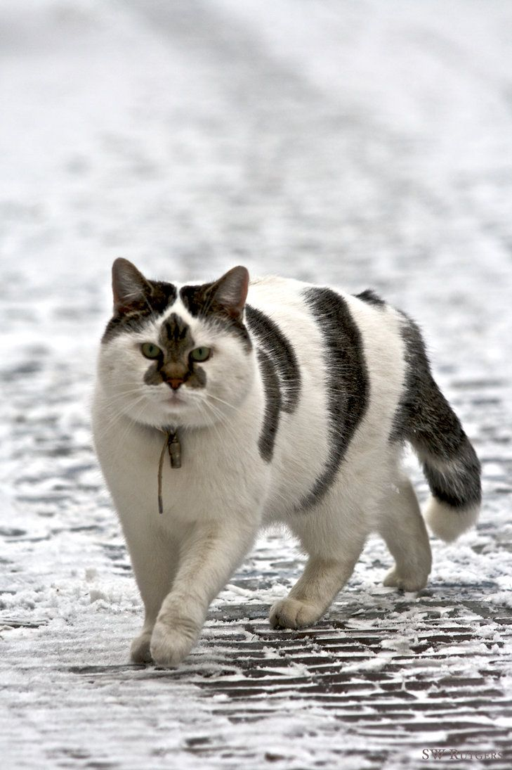 Just a cool looking cat.