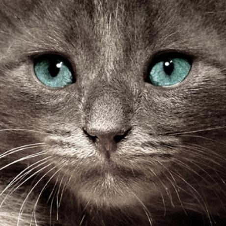 Nine Signs You Need to Take Your Cat to the Vet.  Good to know. The main thing is that you know your cats better than anyone else does and you can tell when something is not right. It's better to be safe than sorry, so if you're uneasy take the baby to the vet!!