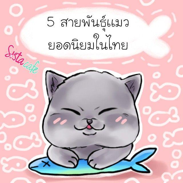 มะหมาก ต องม มะเหม ยว แนะนำ น องเหม ยว สายพ นธ ยอดน ยมในไทย เอาใจสาวทาส แมว ล กแมว แมวเปอร เซ ย แมว