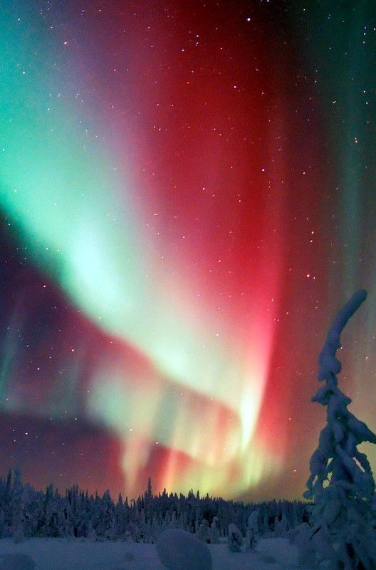The Northern Lights in Finnish Lapland | sky | | night sky | | nature |  | amazing nature |  #nature #amazingnature  https://biopop.com/