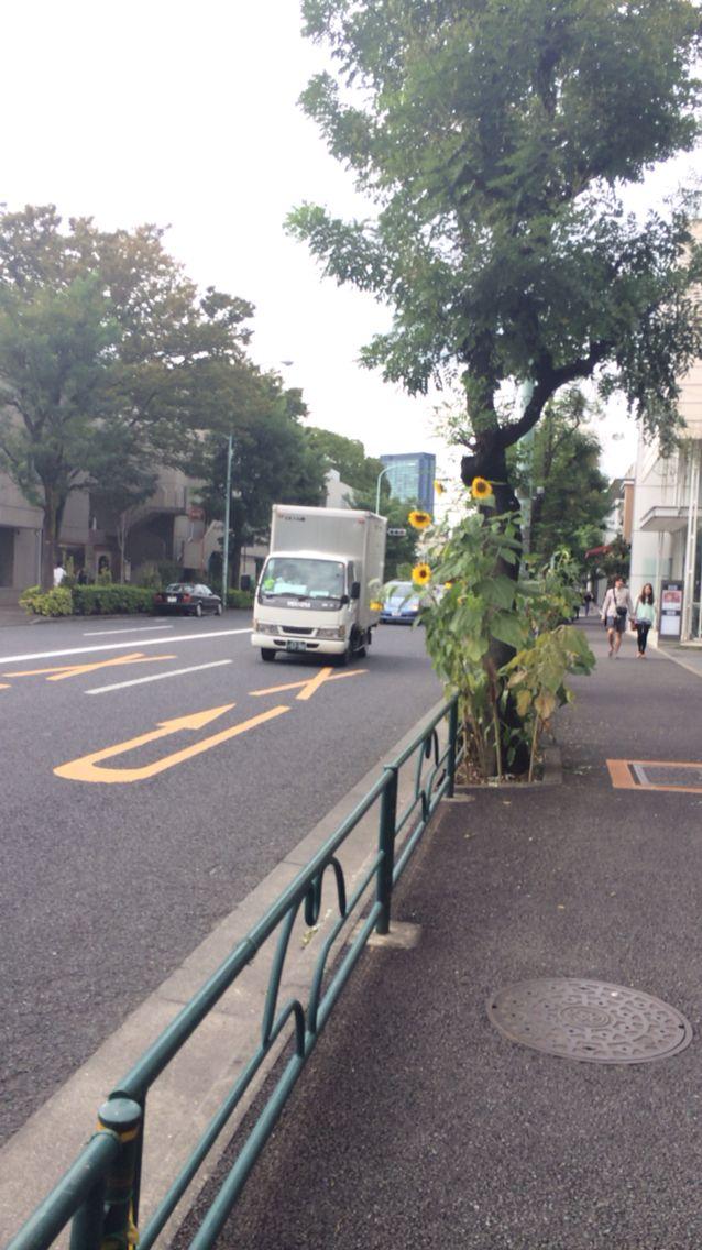Love Daikanyama