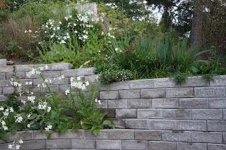 Växter framför