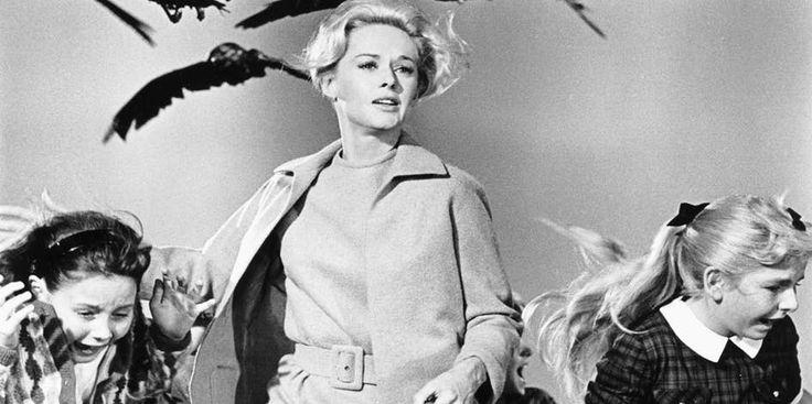 """Los Pájaros. - """"Los Pájaros"""" es otra de las adaptaciones que tienen preocupados a los seguidores del filme original, estará a cargo de la BBC y aún no tiene fecha de estreno."""