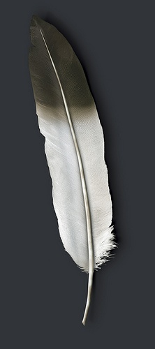 Eagle feathers, bring good luck and have personal significance to us