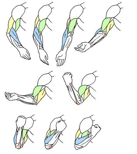 腕まわり 腕の動き方 by KITAJIMAのお絵かき研究所