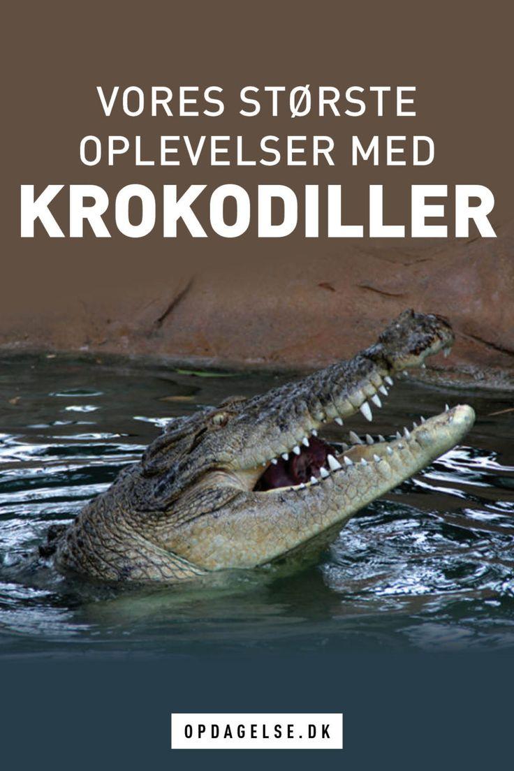 At komme helt tæt på krokodiller - Opdagelse.dk