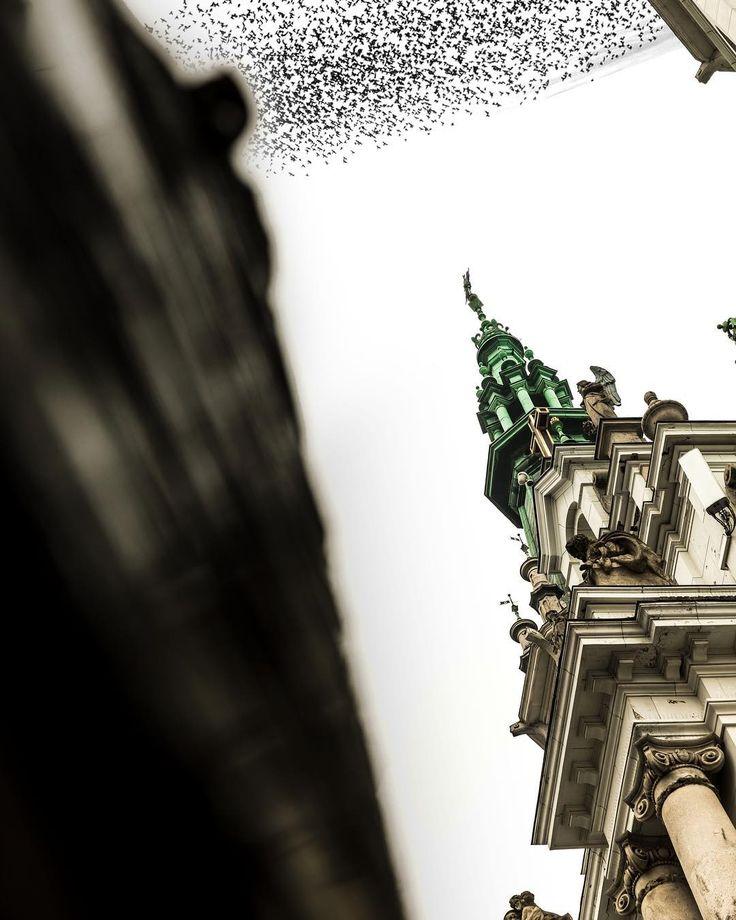 #ptaki #kościół PARISH OF HOLY SAVIOR #warsaw #zbawiciela