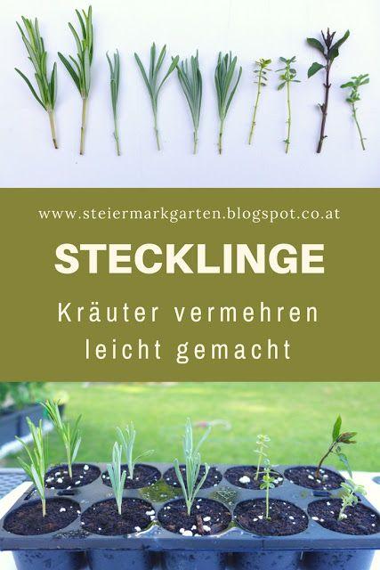 66 best Pflanzen Pflege images on Pinterest Container garden - gartenpflanzen winterhart immergrun