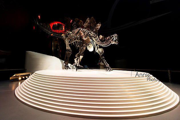 Dinosaur - Natural History Museum - London