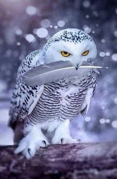 The most striking animal meaning for the owl is its deep connection with wisdom and intuitive knowledge. If you have the owl as a totem or spirit animal, you're likely to have the ability to see what's usually hidden to most. When the owl guides you, you can count on the power of this spirit animal to see beyond illusion and deceit to access the true reality. Owl spirit animals also offer wisdom about the unknown and life's magic.