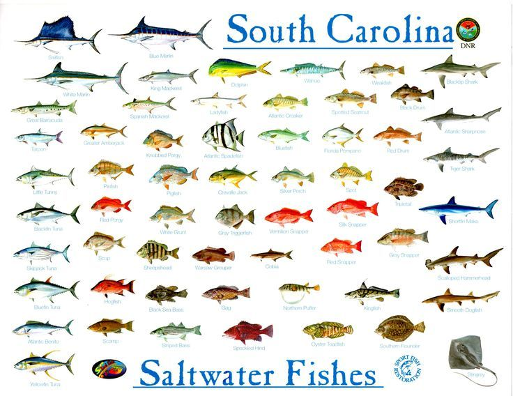 Basic Bottom Fishing Rigs Bottom Fishing Rigs Bottom Fishing Fishing Rigs