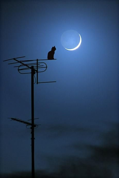 moon and cat