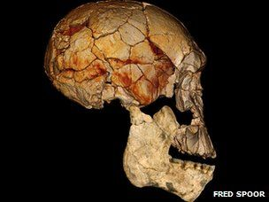 New species of human found in fossils from N. Kenya. Homo Rudolfensis lived 2 million years ago http://www.bbc.co.uk/news/science-environment-19184370