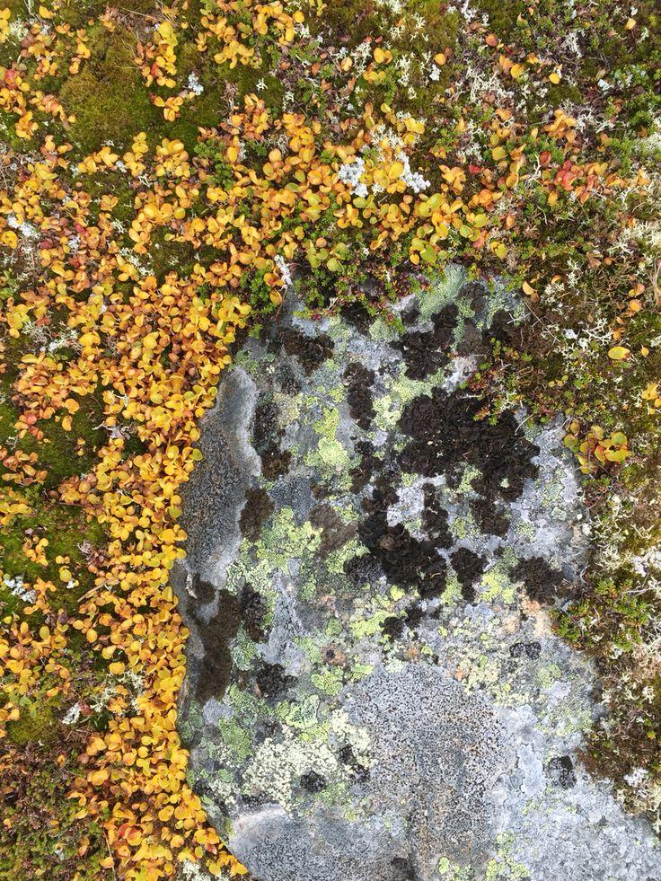 Autumn stone
