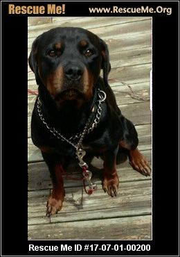 ― Wisconsin Rottweiler Rescue ― ADOPTIONS ―RescueMe.Org
